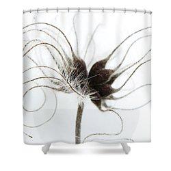 Seeds Shower Curtain by Anne Gilbert