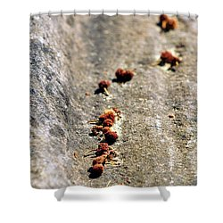 Seeds On Stone Shower Curtain by Kaleidoscopik Photography