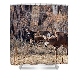 Shower Curtain featuring the photograph Seeing Double by Jim Garrison