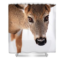 Seeing Into The Eyes Shower Curtain by Karol Livote