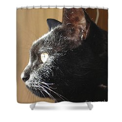 Shower Curtain featuring the photograph Seesa by Kerri Mortenson