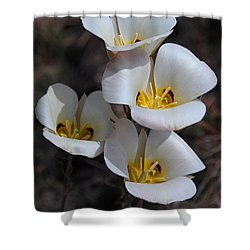 Sego Lily Shower Curtain by Vivian Christopher
