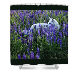 Sekani In Lupine Shower Curtain by Sean Sarsfield