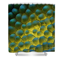 Sem Of Rapeseed Flower Shower Curtain by Eye of Science