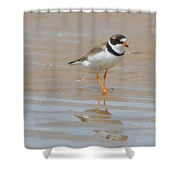 Shower Curtain featuring the photograph Semipalmated Plover by James Petersen