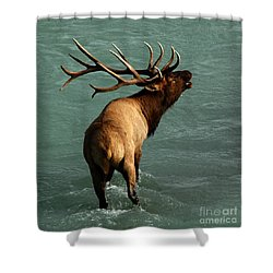 Shower Curtain featuring the photograph Sending A Challenge by Vivian Christopher