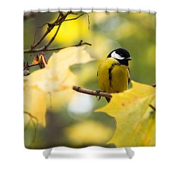 Sensibly Dressed - Featured 3 Shower Curtain by Alexander Senin