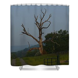 Shower Curtain featuring the photograph Sentinel by Jane Ford