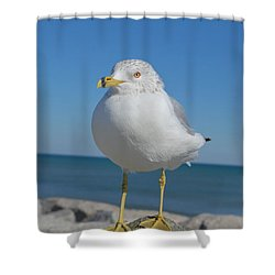 Ring-nosed Gull Shower Curtain