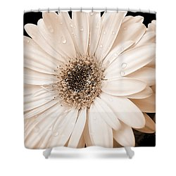 Sepia Gerber Daisy Flowers Shower Curtain by Jennie Marie Schell