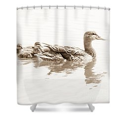 Shower Curtain featuring the photograph Sepia Mallard Family by Anita Oakley