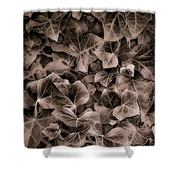 September Ivy  Shower Curtain by Greg Jackson