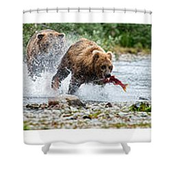 Sequence Of Large Brown Stealing Salmon From Smaller Brown Bear Shower Curtain by Dan Friend