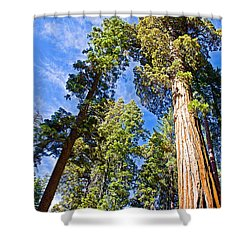 Sequoias Reaching To The Clouds In Mariposa Grove In Yosemite National Park-california Shower Curtain