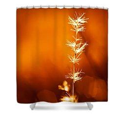 Serene Shower Curtain by Darryl Dalton