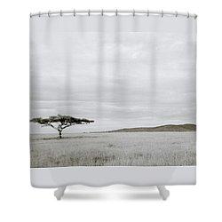 Serengeti Acacia Tree  Shower Curtain by Shaun Higson