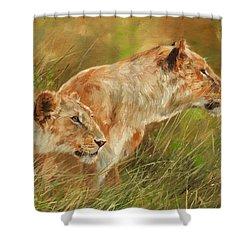 Serengeti Sisters Shower Curtain by David Stribbling