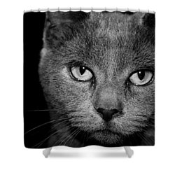 Shower Curtain featuring the photograph Seriously by Cathy Harper