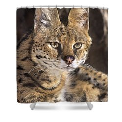 Shower Curtain featuring the photograph Serval Portrait Wildlife Rescue by Dave Welling