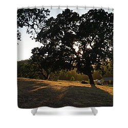Shade Tree  Shower Curtain
