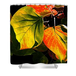 Shades And Shadows Shower Curtain by Will Borden