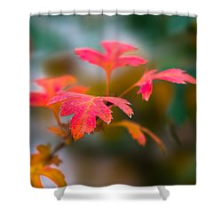 Shades Of Autumn - Red Leaves Shower Curtain by Alexander Senin