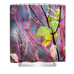 Shades Of Autumn - Reds And Greens Shower Curtain by Alexander Senin