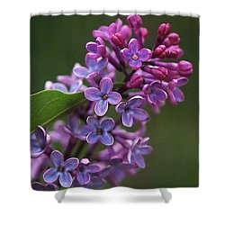 Shades Of Lilac  Shower Curtain