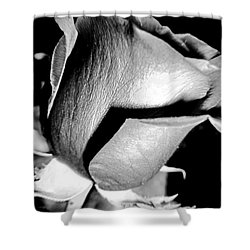 Shades Of Rose Shower Curtain by Nina Ficur Feenan