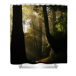 Shadow Dreams Shower Curtain by Jeff Swan