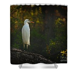 Shadow Heron Shower Curtain