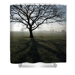 Shadow Tree Shower Curtain by Anne Gilbert