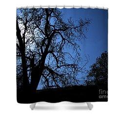 Shadowlands 1 Shower Curtain by Bedros Awak