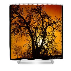Shadowlands 11 Shower Curtain by Bedros Awak