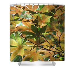 Shadows Of Maple  Shower Curtain