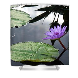Shadows On A Lily Pond Shower Curtain by Eric  Schiabor