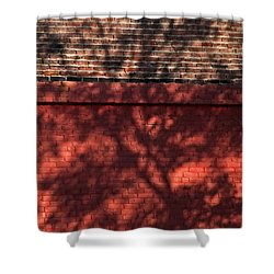 Shadows On The Wall Shower Curtain by Karol Livote