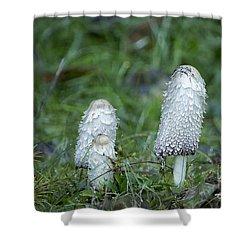Shaggy Cap Mushroom No. 3 Shower Curtain
