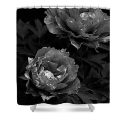 Shower Curtain featuring the photograph Shakuyaku by Rachel Mirror