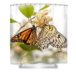 Sharing Shower Curtain