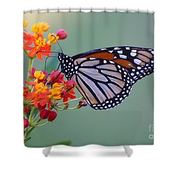 Sharing Shower Curtain by Marty Fancy