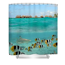 Over-under With Shark And Butterfly Fish At Bora Bora Shower Curtain