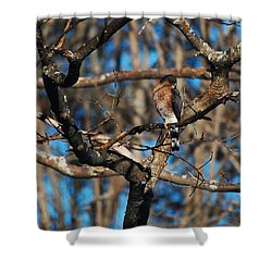 Shower Curtain featuring the photograph Sharp Shinned Hawk by Mim White