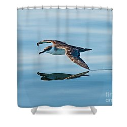 Shearing The Water... Shower Curtain