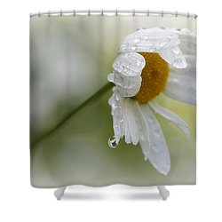 Shedding A Tear Shower Curtain