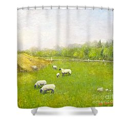 Sheep In Pasture Shower Curtain