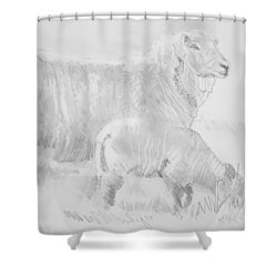 Sheep Lamb Pencil Drawing Shower Curtain