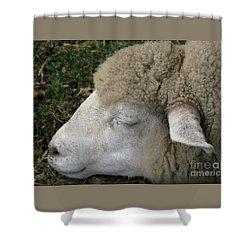 Sheep Sleep Shower Curtain by Ann Horn