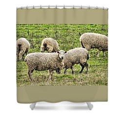 Ewe Lookin At Me Shower Curtain