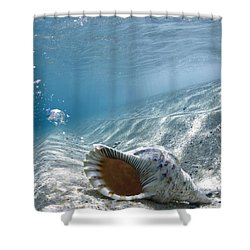 Shell Burp Shower Curtain by Sean Davey